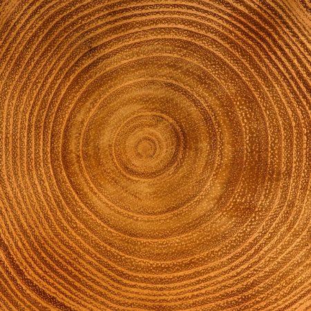 wood-3635541_960_720